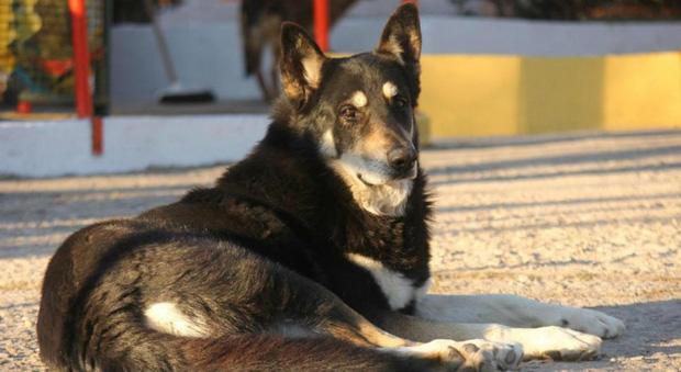 Câu chuyện cảm động về những chú chó trung thành nhất mọi thời đại khiến hàng triệu người không cầm được nước mắt - Ảnh 4.