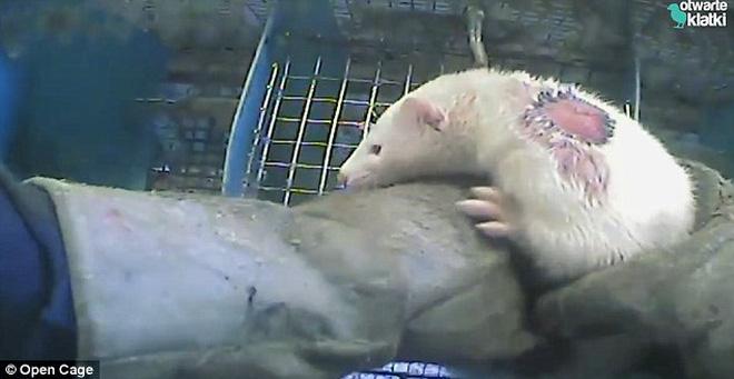 Thảm cảnh động vật bị lột da, xẻ thịt phục vụ cho con người: Những hình ảnh đẫm máu, nước mắt cùng tiếng kêu gào biết bao giờ mới được thấu - Ảnh 14.