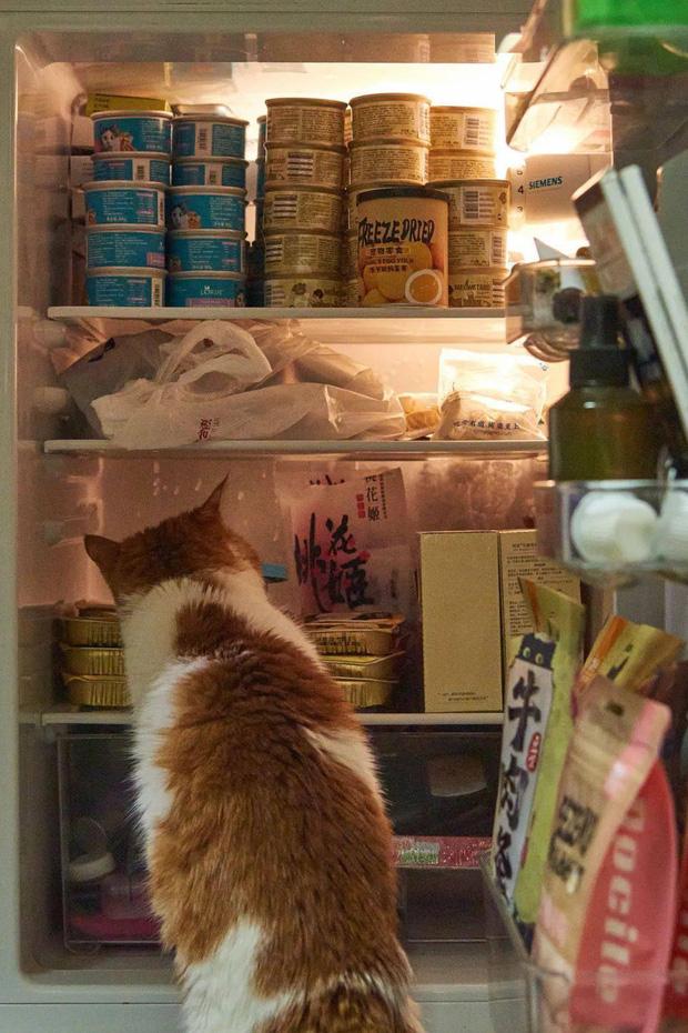 Hội FA xứ Trung khoe tủ lạnh: Người dùng bảo quản chăn bông và ô tô đồ chơi, kẻ lấy chỗ tích trữ đồ ăn cho quàng thượng - Ảnh 3.