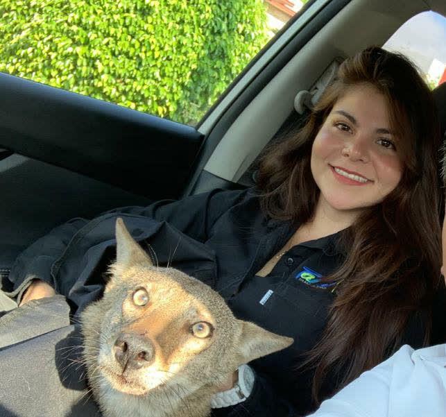 Giải cứu chú chó tội nghiệp, cô gái sốc không nói nên lời khi biết danh tính con vật - Ảnh 1.