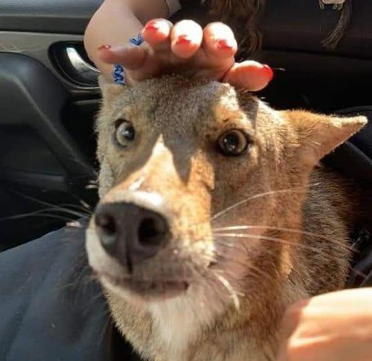 Giải cứu chú chó tội nghiệp, cô gái sốc không nói nên lời khi biết danh tính con vật - Ảnh 2.