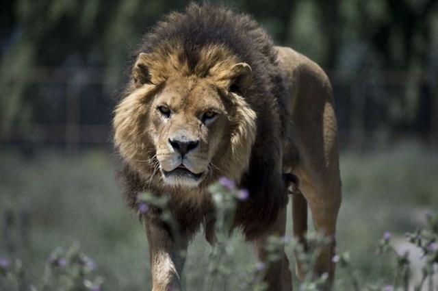 Vườn thú đảo ngược: Nơi mọi người ở trong lồng và động vật được tự do - Ảnh 1.