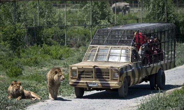 Vườn thú đảo ngược: Nơi mọi người ở trong lồng và động vật được tự do - Ảnh 2.