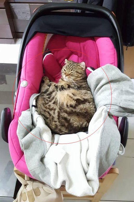 Mèo cưng nhìn chằm chằm vào con nhỏ nhưng chủ nhân không bận tâm, một hôm về nhà sớm mới nhận ra bộ mặt thật của con vật tâm cơ - Ảnh 3.