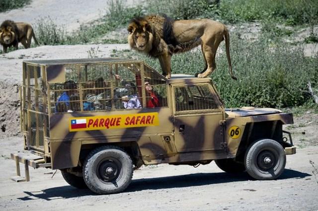 Vườn thú đảo ngược: Nơi mọi người ở trong lồng và động vật được tự do - Ảnh 3.