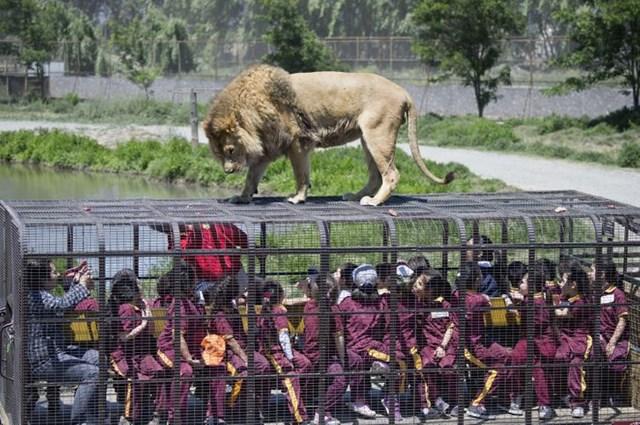 Vườn thú đảo ngược: Nơi mọi người ở trong lồng và động vật được tự do - Ảnh 4.