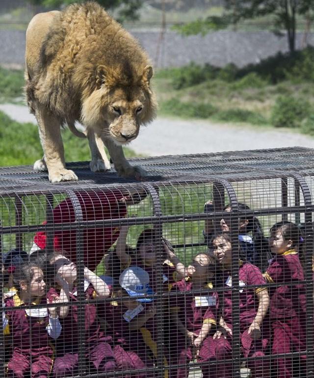 Vườn thú đảo ngược: Nơi mọi người ở trong lồng và động vật được tự do - Ảnh 5.