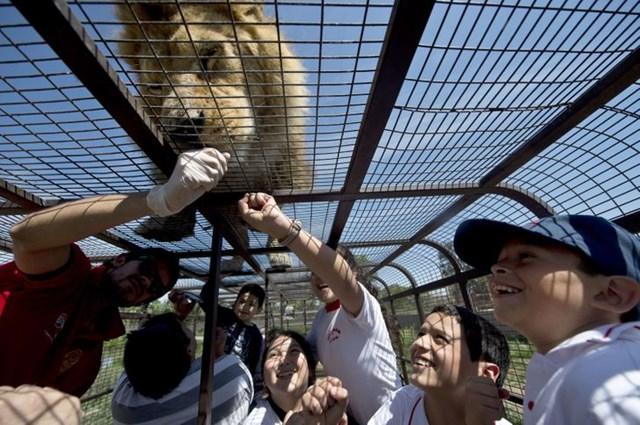 Vườn thú đảo ngược: Nơi mọi người ở trong lồng và động vật được tự do - Ảnh 6.