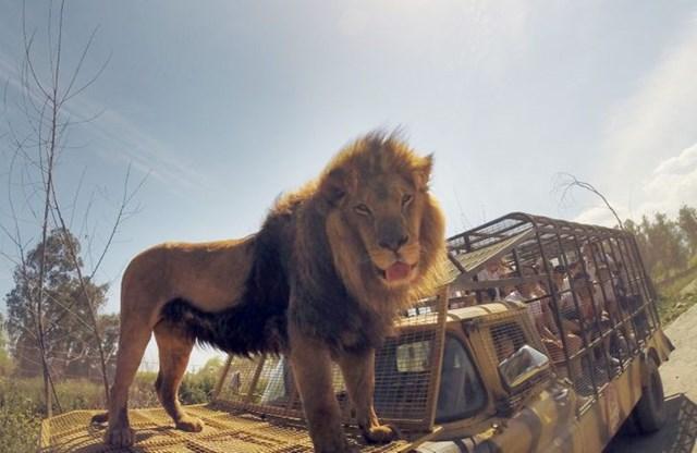 Vườn thú đảo ngược: Nơi mọi người ở trong lồng và động vật được tự do - Ảnh 7.