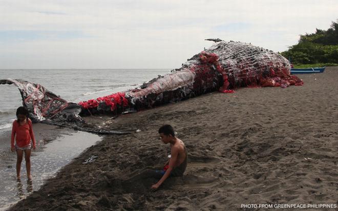 Sáng sớm thức dậy thấy cá voi khổng lồ chết dạt vào bờ biển, người dân hiếu kỳ đổ dồn đến xem rồi sốc khi nhìn thấy thứ trong miệng con vật - Ảnh 1.