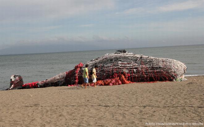 Sáng sớm thức dậy thấy cá voi khổng lồ chết dạt vào bờ biển, người dân hiếu kỳ đổ dồn đến xem rồi sốc khi nhìn thấy thứ trong miệng con vật - Ảnh 3.