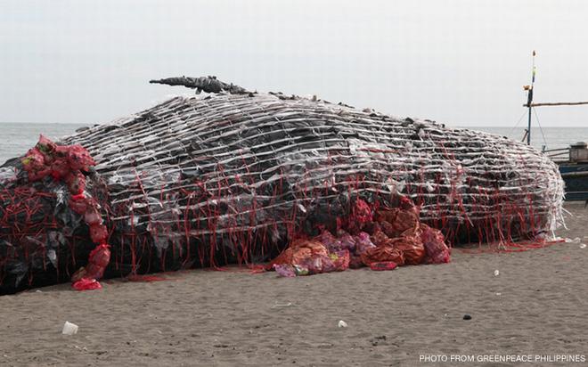 Sáng sớm thức dậy thấy cá voi khổng lồ chết dạt vào bờ biển, người dân hiếu kỳ đổ dồn đến xem rồi sốc khi nhìn thấy thứ trong miệng con vật - Ảnh 6.