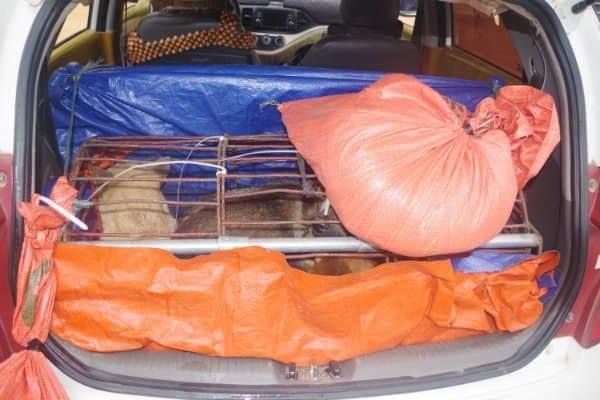 Bắt 3 thanh niên lái ô tô đi trộm chó liên tỉnh  - Ảnh 3.