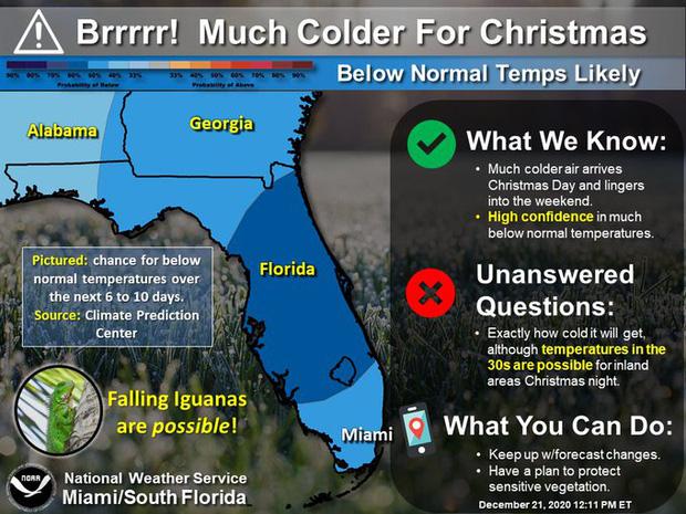 """Thay vì tuyết rơi đêm Giáng sinh, người dân Florida nhận một """"cơn mưa"""" thằn lằn từ trên trời rơi xuống nằm thẳng cẳng đầy đường - Ảnh 1."""