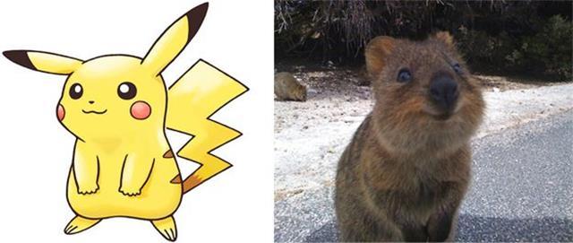Nguyên mẫu đời thực của các Pokémon đình đám - Ảnh 1.