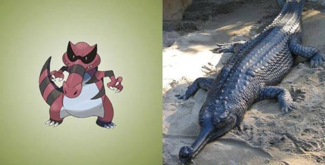 Nguyên mẫu đời thực của các Pokémon đình đám - Ảnh 13.