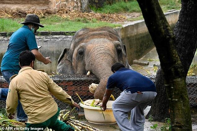 Sau 8 năm, chú voi đơn độc nhất thế giới đã được gặp đồng loại - Ảnh 2.