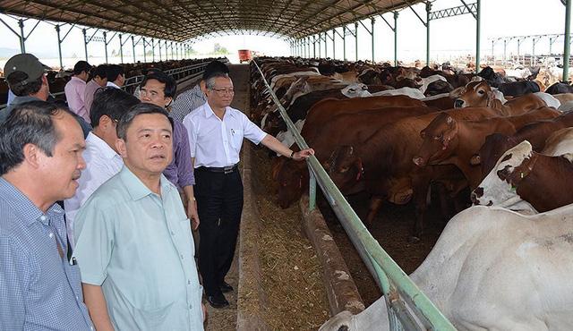 10 năm bão táp của Hoàng Anh Gia Lai: Bỏ bất động sản, tìm về nông nghiệp, từ đỉnh cao huy hoàng tới mấp mé vực thẳm - Ảnh 4.