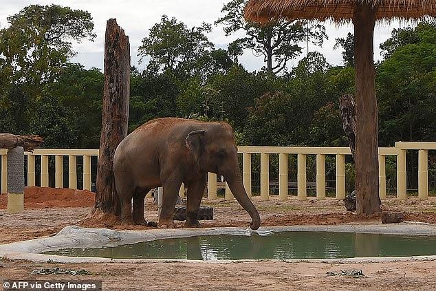 Sau 8 năm, chú voi đơn độc nhất thế giới đã được gặp đồng loại - Ảnh 4.