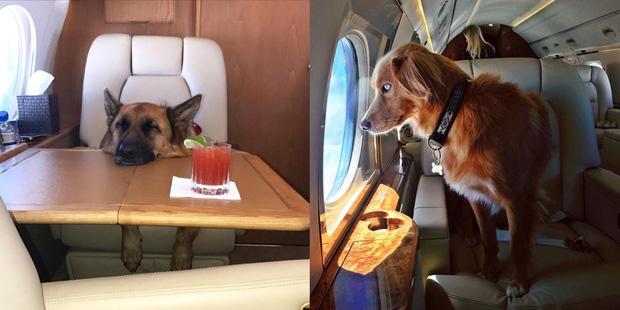 Hermes của hội phú bà fake chỉ là vay mượn, nhưng Ferrari của hội rich dog dưới đây lại không hề giả trân chút nào - Ảnh 8.
