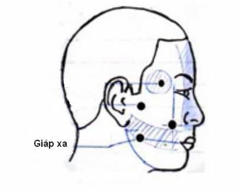 Rảnh tay tranh thủ bấm 5 huyệt vị: Hàm răng chắc bền, tăng cường lưu thông khí huyết - Ảnh 3.