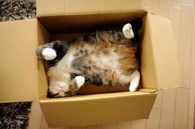 Tò mò chui vào thùng hàng, chú mèo bị ship đi hơn 1.000 cây số và chuyến du lịch bất đắc dĩ khiến nhà chủ lo sốt vó cả tuần - Ảnh 1.