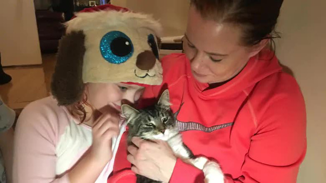 Tò mò chui vào thùng hàng, chú mèo bị ship đi hơn 1.000 cây số và chuyến du lịch bất đắc dĩ khiến nhà chủ lo sốt vó cả tuần - Ảnh 4.