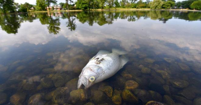 Đây mới là công dụng thực sự của bong bóng cá, xóa bỏ hiểu nhầm phổ biến hơn 300 năm qua - Ảnh 6.