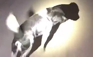 Clip: Chú chó thông minh dẫn đường lính cứu hỏa đến giải cứu con đang bị mắc kẹt