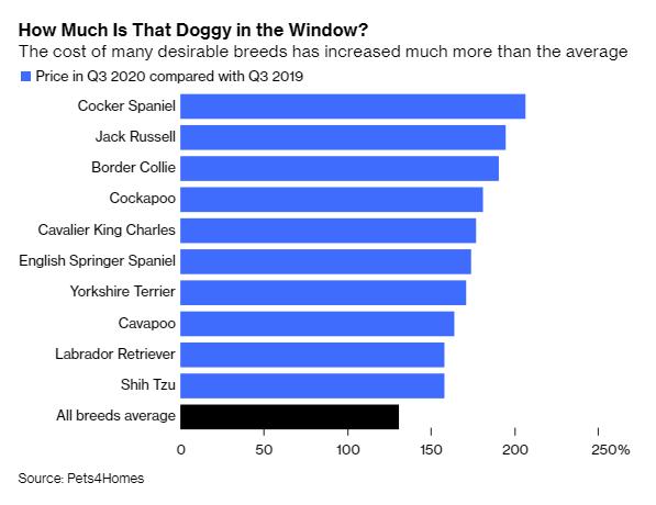 Nuôi chó - Kênh đầu tư dễ thương và siêu lợi nhuận hơn cả Bitcoin trong mùa dịch Covid-19 - Ảnh 2.