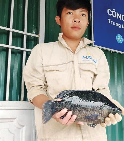 Trang trại nuôi cá rô phi nặng 2kg, khám bệnh thường xuyên, xuất đi Mỹ và châu Âu - Ảnh 1.