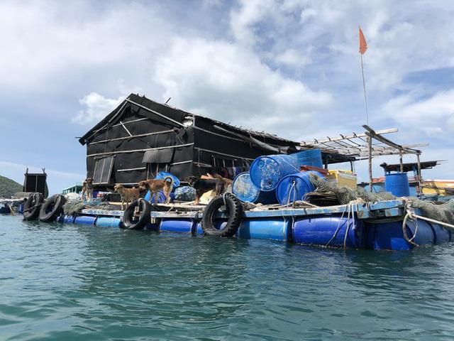 Nuôi cá lồng bè ở Nam Du, thu hàng trăm triệu mỗi năm - Ảnh 2.