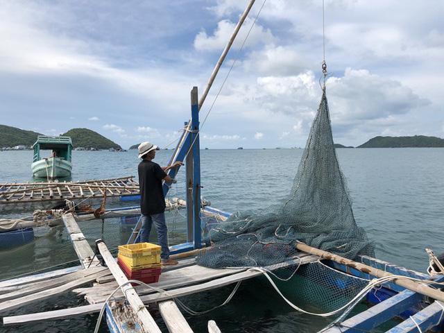Nuôi cá lồng bè ở Nam Du, thu hàng trăm triệu mỗi năm - Ảnh 6.