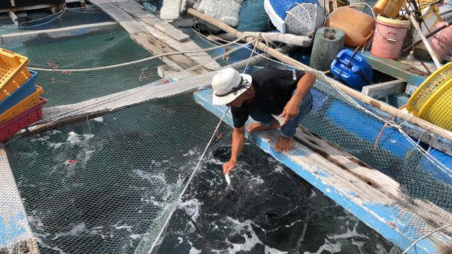 Nuôi cá lồng bè ở Nam Du, thu hàng trăm triệu mỗi năm - Ảnh 8.