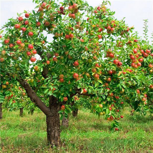 """Những gốc cây """"mắn đẻ"""" nhất thế giới khiến người xem tưởng nhầm là đột biến - Ảnh 1."""