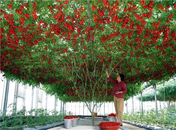 """Những gốc cây """"mắn đẻ"""" nhất thế giới khiến người xem tưởng nhầm là đột biến - Ảnh 4."""
