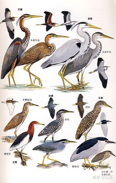 Các nhà khoa học phát hiện ra bí mật giúp loài chim thoát khỏi sự tuyệt chủng hàng loạt - Ảnh 1.
