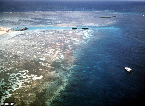 Ngạc nhiên cách san hô tự bảo vệ mình trước sự gia tăng nhiệt độ nước biển - Ảnh 2.