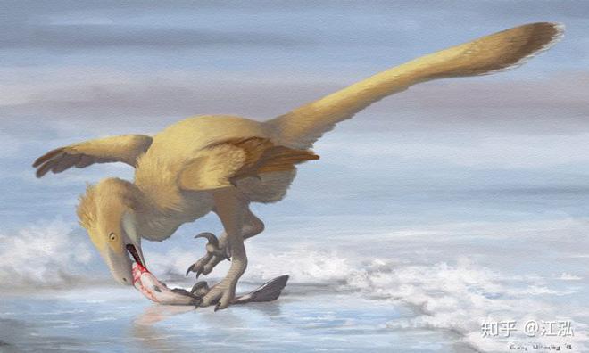 Các nhà khoa học phát hiện ra bí mật giúp loài chim thoát khỏi sự tuyệt chủng hàng loạt - Ảnh 5.