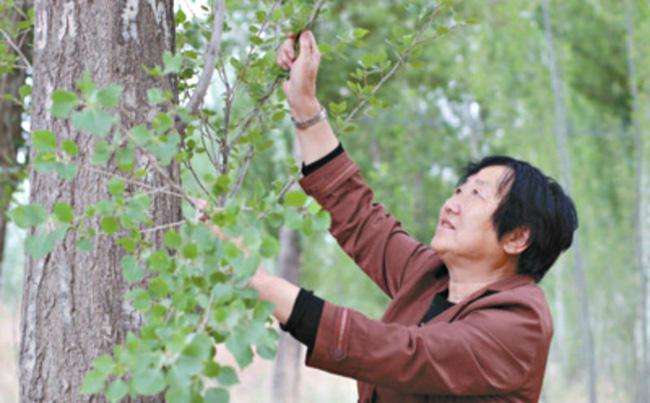 40 năm cặm cụi trồng rừng nơi cát sỏi, người phụ nữ biến hoang mạc thành thiên đường 10 vạn cây xanh - Ảnh 2.