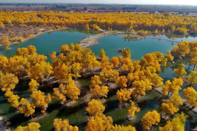 40 năm cặm cụi trồng rừng nơi cát sỏi, người phụ nữ biến hoang mạc thành thiên đường 10 vạn cây xanh - Ảnh 5.