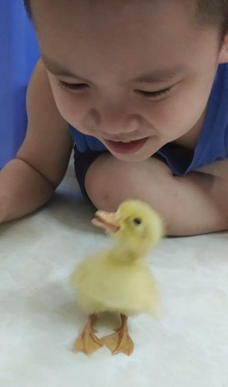 Thấy mẹ xem facebook có chú đẹp trai ấp trứng vịt thành công, con trai cũng nằng nặc đòi học theo và cái kết muốn cười tắc thở - Ảnh 2.