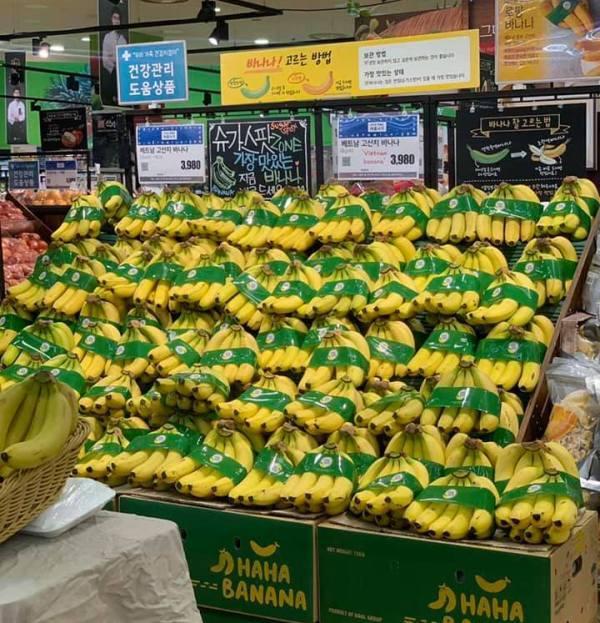 Chuối Việt Nam chính thức có mặt tại hệ thống siêu thị lớn của Hàn Quốc - Ảnh 1.