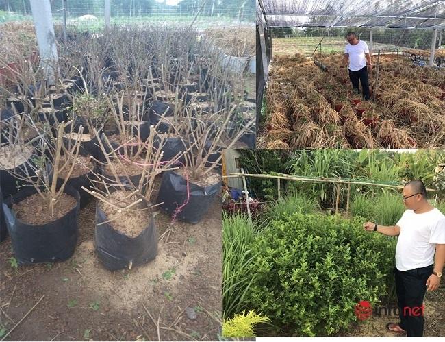 9X biến cây mọc hoang thành đặc sản, bán gần triệu đồng mỗi kg - Ảnh 1.