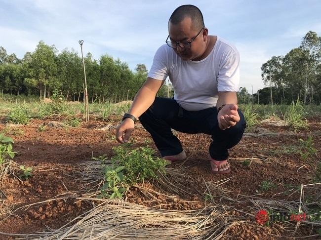 9X biến cây mọc hoang thành đặc sản, bán gần triệu đồng mỗi kg - Ảnh 2.