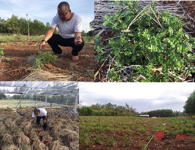 9X biến cây mọc hoang thành đặc sản, bán gần triệu đồng mỗi kg - Ảnh 3.