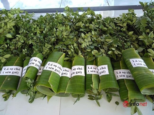 9X biến cây mọc hoang thành đặc sản, bán gần triệu đồng mỗi kg - Ảnh 4.
