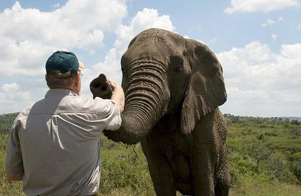 Vì sao đàn voi đi bộ 12 tiếng đến đưa tiễn một người qua đời, viếng mộ suốt 7 năm? - Ảnh 2.