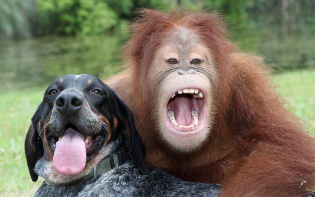 Đười ươi và chó: Có cậu trên đời này tớ không còn lo gì nữa! - Ảnh 1.