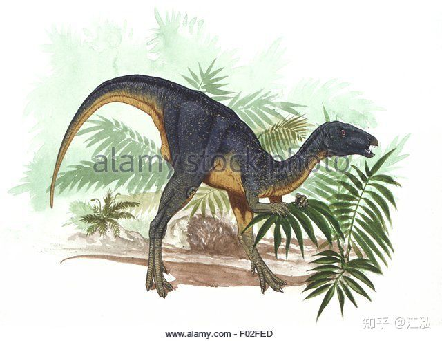 Úc phát hiện ra hóa thạch khủng long biến thành đá quý - Ảnh 13.